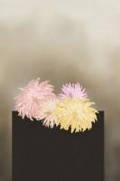 """Chrysanthemum, 2015 aus der Serie """"Blumen"""""""